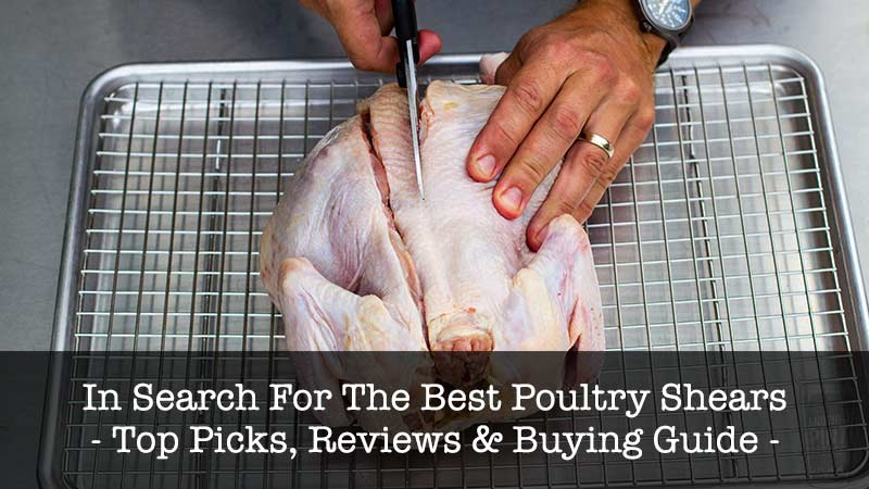 Best Poultry Shears