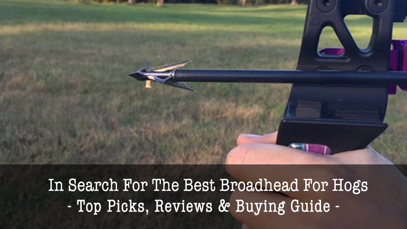 best broadhead for hogs