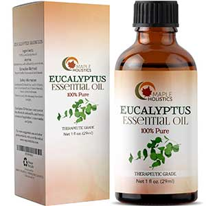 maple holistic's eucalyptus essential oil