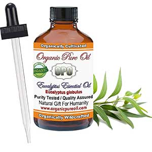 organic pure oil's eucalyptus oil